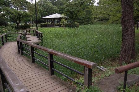猿江公園南の池