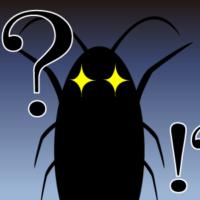 深夜のゴキブリ駆除