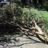 倒木を片付け