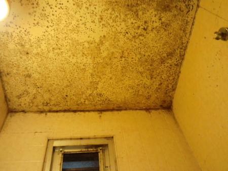 浴室天井のカビ
